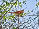 Hungry? by brandondockery, photography->birds gallery