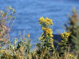 Flowers by the Sea by Lithfo, Photography->Flowers gallery