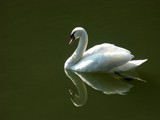 White & green (female) by ppigeon, Photography->Birds gallery