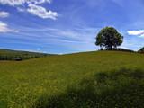 Bliss by biffobear, photography->landscape gallery