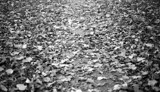 Through the Leaves by timw4mail, contests->b/w challenge gallery