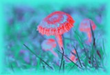 Mushrooms in Unreality by LynEve, photography->manipulation gallery
