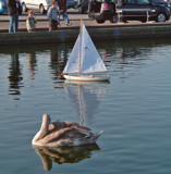 Sailing By by braces, Photography->Birds gallery