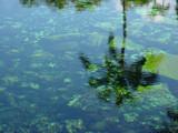 Honu by manodshark, Photography->Shorelines gallery