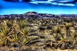 Sonoran Desert - Joshua Tree by snapshooter87, photography->landscape gallery