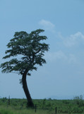 Tree (ii) by sadun, Photography->General gallery
