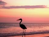 My Way by regmar, Photography->Birds gallery
