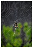 Waiting by RL, photography->insects/spiders gallery