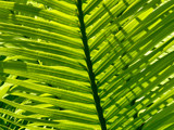 palm fronds by jeenie11, Photography->Nature gallery