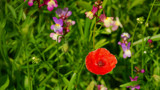 They're Called Zooalogical Gardens For A Reason by braces, photography->flowers gallery