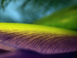 Nature's Abstract by LedsLens, Photography->Macro gallery