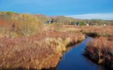 bank street bog by solita17, Photography->Landscape gallery