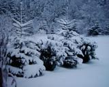 Snowed in by wingnut4, Computer->Landscape gallery