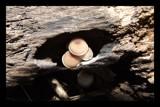 Hidden Sanctuary by BluePhoenix, photography->mushrooms gallery