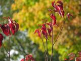 Autumn #2 by HylianPrincess1985, Photography->Nature gallery