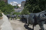 Cattle Drive II by dleuty, Photography->Sculpture gallery