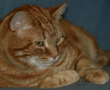 Tom T. by tigger3, photography->pets gallery