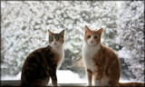 We Are Not Amused ! by LynEve, photography->pets gallery