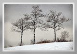 Winter Trees by gerryp, Photography->Landscape gallery