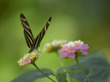 Ready for Flight by MiLo_Anderson, Photography->Butterflies gallery