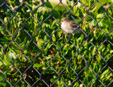 bird on a wire fence by solita17, Photography->Birds gallery