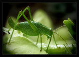 A bugs life 2 by JQ, photography->insects/spiders gallery