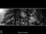 dark forrest by Frelu, Photography->Manipulation gallery