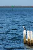 Cormorant Manns Beach by Samatar, Photography->Birds gallery