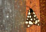 Moth on my Door by StarLite, photography->butterflies gallery