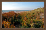 Zeeland Coast (22), Autumn in the Dunes by corngrowth, Photography->Shorelines gallery