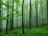Rainforest 2 by ppigeon, Photography->Landscape gallery