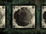 Ivy Roses by peqie, photography->manipulation gallery