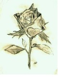 A Single Rose by seanbnd, Illustrations->Traditional gallery