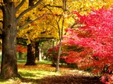 The Colors of a Missouri Autumn by jojomercury, photography->gardens gallery