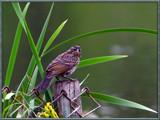 L'oiseau by noranda, Photography->Birds gallery
