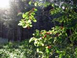 Forest secret by digit_elie, photography->landscape gallery