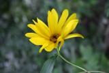 Wild Flower by NurseMel, Photography->Flowers gallery
