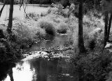 Quiet Stream by makeshifter, photography->water gallery