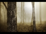 Shrouded Trees by groo2k, Photography->Manipulation gallery
