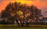 Live Oaks Sunset by 0930_23, photography->manipulation gallery