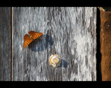 Butterfly on a Wall by Cherry79, photography->butterflies gallery