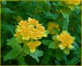 Euphorbia by trixxie17, Photography->Flowers gallery