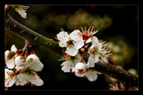 spring sprung by JQ, Photography->Flowers gallery