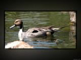 Animal Crackers XXIII by Hottrockin, Photography->Birds gallery