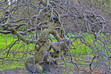 Medusa Tree by Ramad, photography->nature gallery