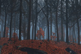 Winter Leaves by Akeraios, computer->landscape gallery