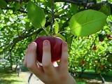 Apple Picking by Jims, photography->nature gallery