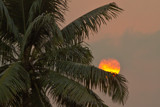 Sunset Through the Palms by jeenie11, photography->sunset/rise gallery