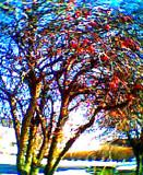 Tree by msjenham, Photography->Landscape gallery