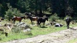 The wild horses of Rila Mountain by sonyatod, photography->animals gallery
